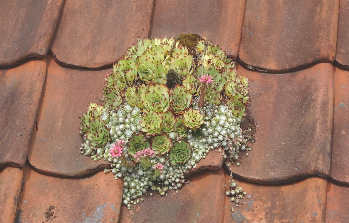 kasveja katolla