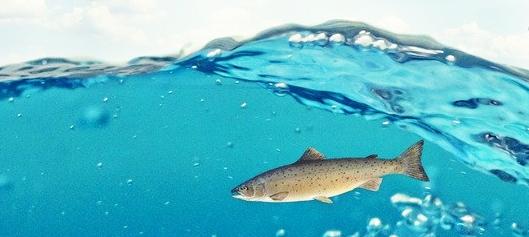 kala vedessä.jpg